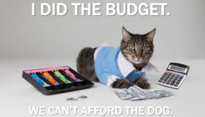 Cat doing the budget